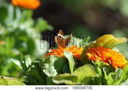 A beautiful butterfly flutters onto a yellow flower