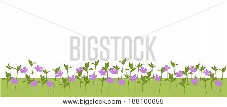 Vector illustration of a meadow with flowers and plants and grass isolated on a white background