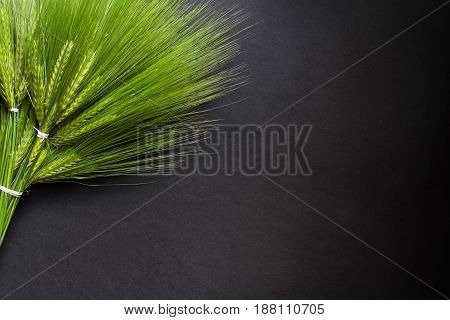 top view closeup of large fresh green wheat bunch bouquet bind with white thread on dark background copyspace available