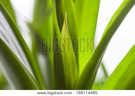 Green grass. Blades of grass. Long juicy stems. Close-up.