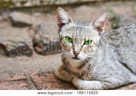 Cat with striking green eyes sitting with feet tucked under