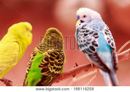 beautiful parrot lovebird on colorful nature background