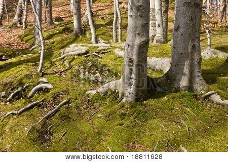 Landscape in Karkonosze Mountains, Poland