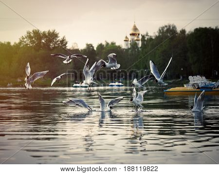 flock of seagulls over the water. The urban landscape of pond green trees the dome of the Church