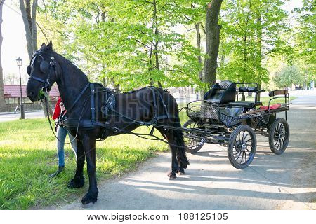 NESVIZH BELARUS - May 20 2017: a black carriage with a horse. Attraction for tourists