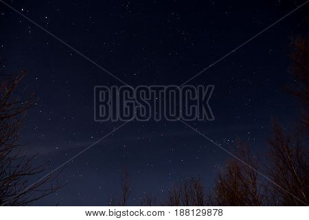 Sky full of stars seen from behind trees