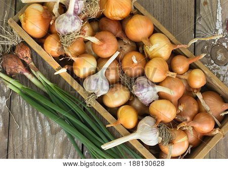 Close-up organic onion garlic bulbs and garlic cloves on wodeen background. . bulbs. Onion Garlic cloves on wooden vintage door.flat lay style