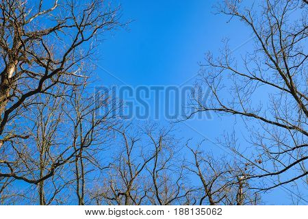 Background of dry branches with the blue sky from bottom view