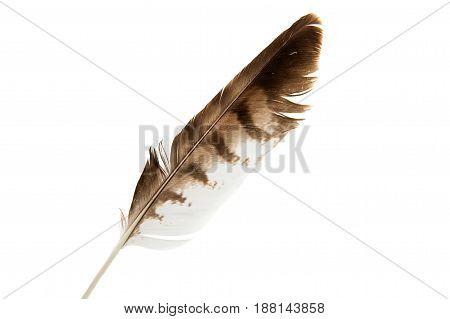 Bird black feather isolated on white background