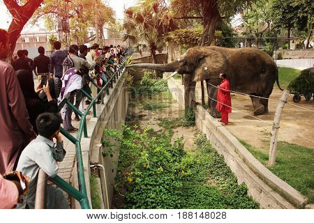 People are feeding an elephant SUZI in the Lahore zoo Punjab Pakistan 24/03/2016