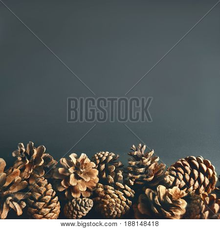 Pine cones at the bottom of gray background.