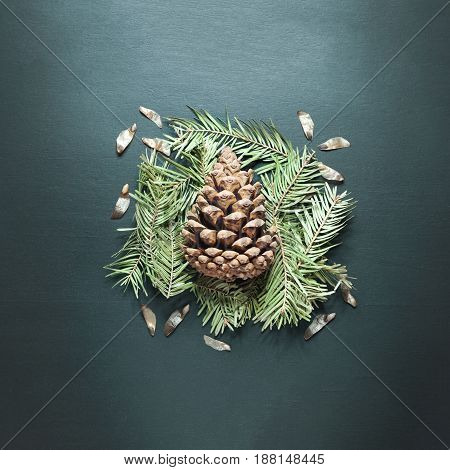 Pine cones and coniferous branches on gray background.