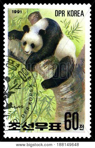 STAVROPOL RUSSIA - May 14 2017: A Stamp sheet printed in North Korea shows Panda sleeping series Pandas circa 1991
