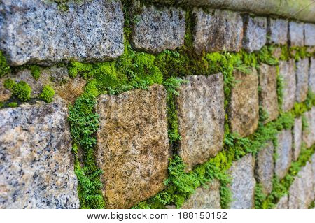 Close up. Beautiful brick wall with green moss