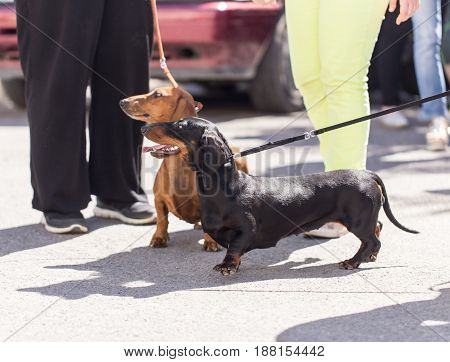 Man holds a leash dog on the nature