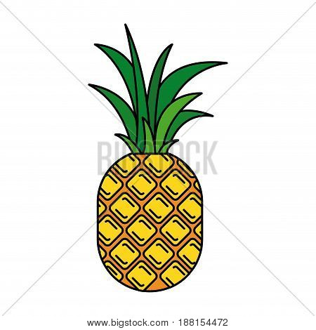 colorful silhouette with pineapple fruit vector illustration