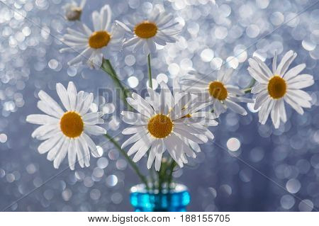 Daisies in a bottle on bokeh background.