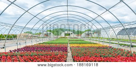 Open Air Greenhouse With Blooming Flowers
