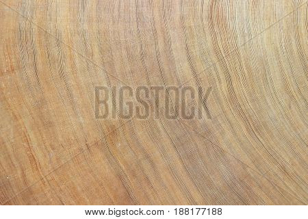 The texture of cross section wood is so amazing.