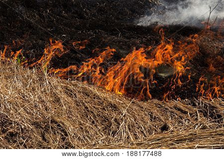 Close up of small line if fire dividing brown straw and burnt black straw