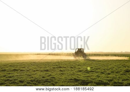 Tractor On The Sunset Background. Tractor With High Wheels Is Making Fertilizer On Young Wheat. The