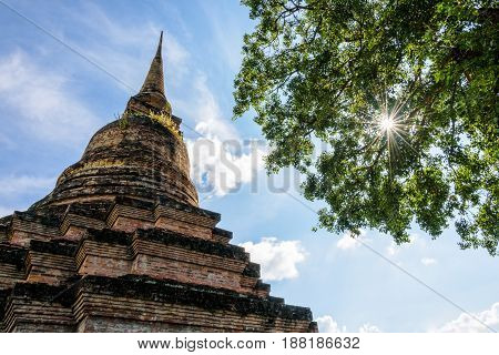 Ancient pagoda near a large tree with green leaves and sunlight on blue sky at Wat Maha That temple in Sukhothai Historical Park old city and famous tourist attraction of Sukhothai Thailand