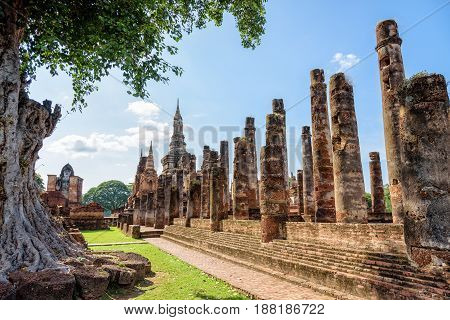 Ancient pagoda near a large tree in the ruins under the blue sky at Wat Maha That temple in Sukhothai Historical Park old city and famous tourist attraction of Sukhothai Province Thailand