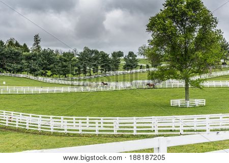 Paddocks of White Fences on Horse Farm on Overcast Day