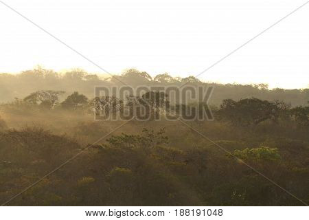 Morning in the mexican Forest and Bushland in Oaxaca Province
