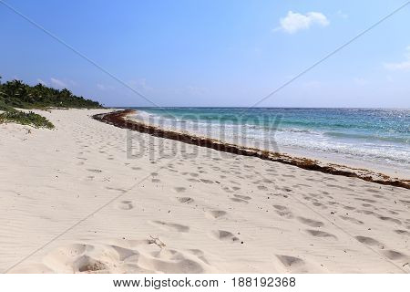White Beach full with red Seaweed in Yucatan, Mexico