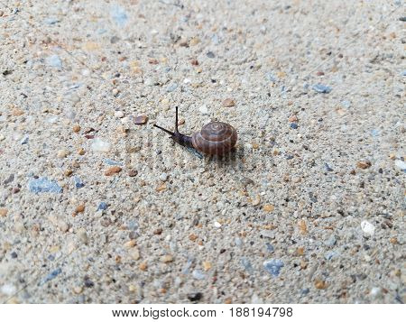small snail crawling on grey cement slab