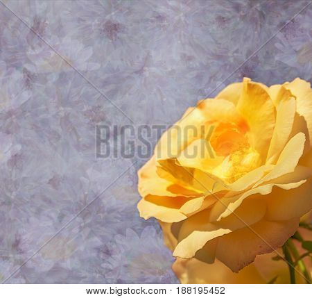 Purple lilac floral sympathy condolences card with yellow rose flower background