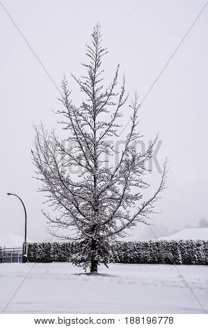 Lonely tree in snow on winter time in Canada