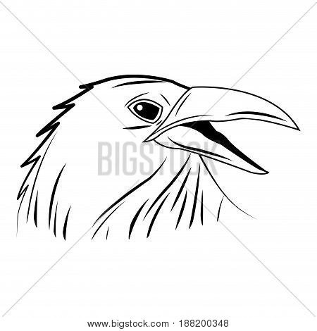 crow, raven or corvus bird vector illustration