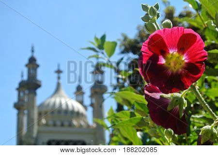 A Background With Pink Mallow Flower And Blurred Royal Brighton Pavilion At Summer Day, East Sussex,
