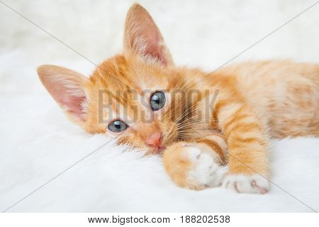 Yellow striped cat lying on the bed.