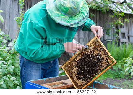 Beekeeper holding frame of honeycomb with bees and cleaning of drones