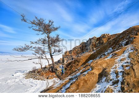 Larch on shore of Lake Baikal. View to north of Cape Burkhan. Olkhon Island. Irkutsk region. Russia
