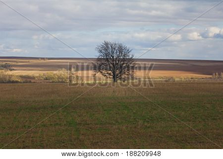 Lonely tree among autumn field under blue sky