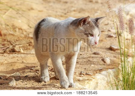 Homeless cat is hunted in a grass