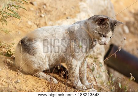 Homeless Cat On A Land