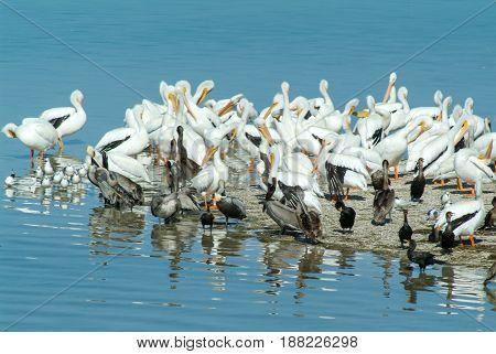 Birds On The Island De Los Pajaros In Holbox