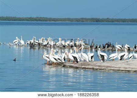 Birds on the island de los Pajaros in Holbox, Mexico