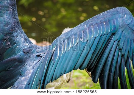 Wings Of Vulture Bird Ugly Blue Feathers