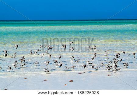 The Tropical Beach Of Holbox