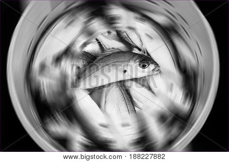 Black and white fish fresh recently caught in a bucket with a radial blur