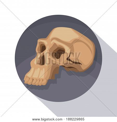 circular frame shading of poster closeup human skull vector illustration