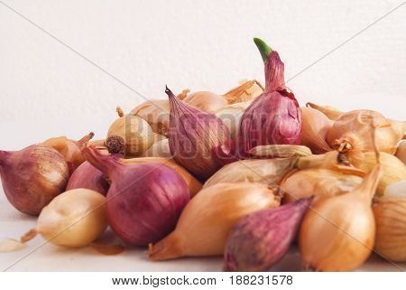 Shallow Onion For Planting On A White Background