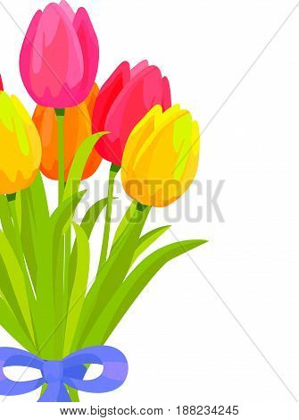 Bouquet of colorful tulips. Romantic gift from yellow, orange, red and pink tulips bounded with blue ribbon flat vector on white. Spring flowers concept with scented posy fragment and copyspace