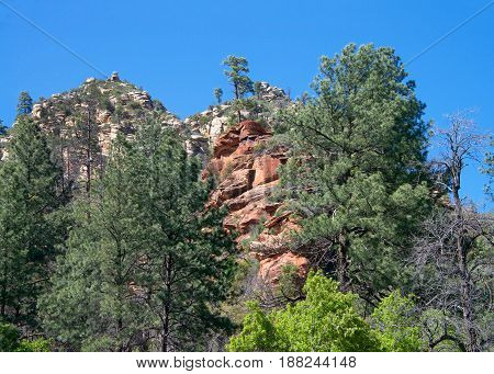 Green pine trees red rocks typical of Sedona Arizona peaking out from behind the trees. Clear blue sky.